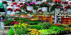 Garden Centers - Perfect Gardening Tips