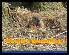 What Is a Groundhog--video (Scholastic)