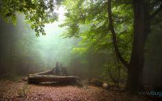 green serenity by armin_aminelahi - Unforgettable Landscapes Photo Contest by Zenfolio Walk In The Woods, Armin, Dark Souls, World Best Photos, Photo Tips, Landscape Photos, Photo Contest, Great Photos, Color Splash