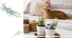 Editor Mayra Louise (34) is er thuis maar druk mee: een eigen indoor garden. Steek ook jouw groene vingers uit de mouwen en maak een indoor garden! Hot