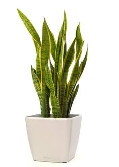 Why plant gifting industry is booming - Quora