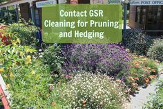 Pruning and hedging at GSR Cleaning is very affordable and only executed by our experienced gardeners and landscape artists so can get what you want at a budget-friendly price but with high quality results. Call us for booking : 1800 477 000 & (03) 95 477 477