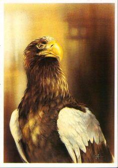 Check out Soviet Steller's sea Isakov Steller's Sea Eagle, Artist, Animals, Vintage, Antique, Ebay, Check, Animales, Antiques