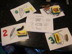 Lots of butterfly unit ideas for preschool