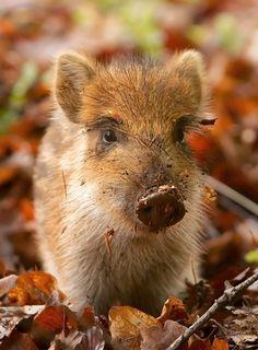 Beautiful Little Pig