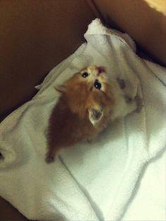 =^*^= Awwwww Koichi's kitten? Aww ♥♥