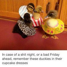 Ducklings in skirts