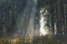 Regensburg, Bayern Light  #nature #light #forest