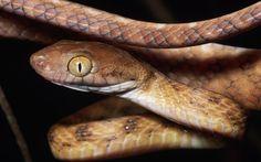 Find out: Snake wallpaper on  http://hdpicorner.com/snake/