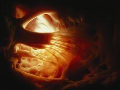 <p>Photo: Inside the heart</p>