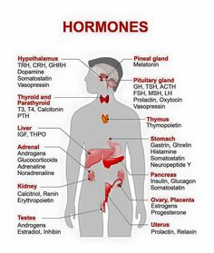 Endocrine System Diagram Endocrine System Anatomy And Physiology Nurseslabs. Endocrine System Diagram Human Body Endocrine System The Endocrine System. Medical Facts, Medical Information, Medical Science, Medical Coding, Science Biology, Life Science, Learn Biology, Ap Biology, Medical Care