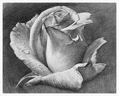 drawings of personalities Beautiful Flower Drawings, Pencil Drawings Of Flowers, Pencil Sketch Drawing, Pencil Art Drawings, Art Sketches, Pencil Colour Painting, Pop Art Wallpaper, Still Life Drawing, Charcoal Art