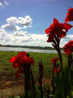 Landscape in Brazil - Minas Gerais