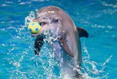 Celebrate-Christmas-at-Dubai-Dolphinarium.Also win many prizes including gold, yacht trips, limo trips, dhow cruises, desert safaris and more. - See more at: http://www.one1info.com/article-Celebrate-Christmas-at-Dubai-Dolphinarium-2543#sthash.Mvi34l2P.dpuf