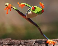 """Kungfu frog by shikhei goh. Shouldn't the """"Kung Fu Fighting"""" song be playing for this guy? Funny Animal Memes, Animal Quotes, Cute Funny Animals, Funny Animal Pictures, Funny Cute, Hilarious, Funny Pics, Cat Memes, Beautiful Creatures"""