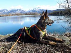 Hunde Foto: Tanja und Shakira vom Gsiberger - ....ohne Worte !!! Hier Dein Bild hochladen: http://ichliebehunde.com/hund-des-tages  #hund #hunde #hundebild #hundebilder #dog #dogs #dogfun  #dogpic #dogpictures