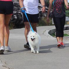 For Raff it's all about the #activewear  #strutting #walkies #running #justdoit #bonditobronte #work #workit #fresh #squad #raff #dog #instadog #whitedog #fluffy #fluffydog #nsw #sydney #bondi #bondiwoof by bondiwoof http://ift.tt/1KBxVYg