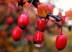 Have a droplet free weekend :-)