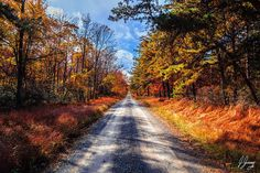 Shade Mountain Road in Fall Five Art Print by Joshua Zaring. All prints are professionally printed, packaged, and shipped within 3 - 4 business days. Thing 1, Landscape Prints, Nature Prints, All Print, Fine Art Prints, Mountain, Country Roads, Shades, Fall