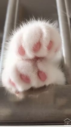 Funny Cute Cats, Cute Baby Cats, Cute Little Animals, Cute Funny Animals, Kittens Cutest, Cute Babies, Cute Animal Photos, Cute Animal Videos, Funny Animal Pictures
