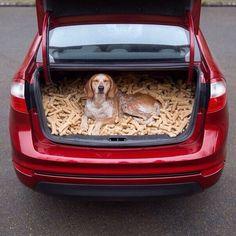 The happiest dog / Самая счастливая собака