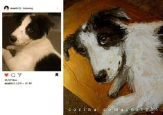 #instadogs#dogart#puppyeyes #mansbestfriend #dogsoninsta #petartist#doglover#bordercollie #bordercolliepuppy #aksakfn12 #kimyoungkwang…