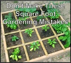 Don't Make These Square Foot Gardening Mistakes