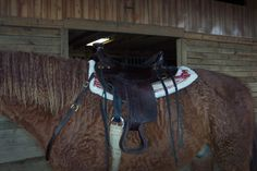 Trying to get a pic of Denny in his Tucker. That is the BO's sadde pad. Funny how this saddle looks so small on him.. and yet so huge on the stand!