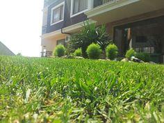 Bulgaria. Grass