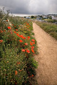 Poppy-lined Pathway (©David Carvey - The Magic Of Cornwall) Devon And Cornwall, Cornwall England, England Ireland, England Uk, Beautiful World, Beautiful Places, Scilly Island, Lyme Park, British Countryside