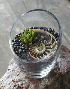 Cut glass vase with nautilus shell on hematite sand and black river rocks.