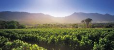 Steenberg Hotel in Cape Town, South Africa - vineyards Cape Town Accommodation, Cape Town Hotels, Visit South Africa, Cape Town South Africa, South African Wine, Travel Reviews, Places Of Interest, Wine Country, So Little Time