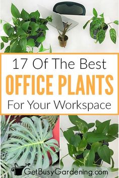 17 Of The Best Office Plants For Your Workspace It's time to add some green to your boring corporate office space. This list of easy office plant