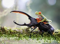 Nature Is So Amazing It Doesn't Need Photoshop - 12 Epic Animal Moments Captured