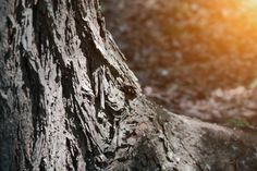 tree rot bark tree bark in selective focus