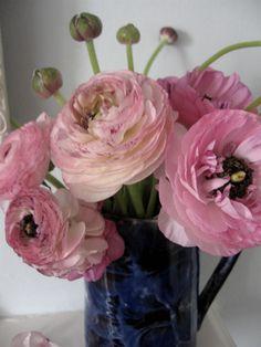 Tissue Paper Rununculus Flowers... my favourite