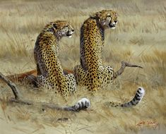 Lute Vink. One of the best wildlife artists in the world and obviously in South Africa. Also known as my dad ♥ ♥ Painting : Cheetahs