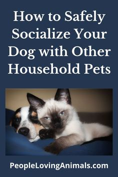 How to Safely Socialize Your Dog with Other Household Pets Introducing dogs, introducing dogs and cats, introducing pets, introducing new dog, introducing new pet, introducing new puppy, introduce a new dog, introduce a new puppy, Pet Care