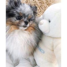 Met teddy