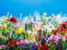 蜷川実花のソロ・エキシビション「earthly flowers, heavenly colors」展が2017年3月27日(月)から5月14日(日)まで、丸の内ハウスにて開催される。 国内外の美術館で...