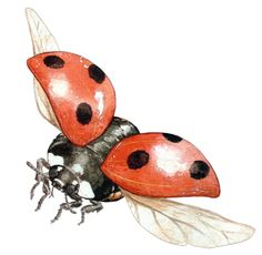 This high quality free PNG image without any background is about ladybug, insects, animal and coccinellidae. Lady Bug Tattoo, Animal Paintings, Animal Drawings, Fly Drawing, Ladybug Art, Watercolor Painting Techniques, Butterfly Baby, Insect Art, Beautiful Bugs