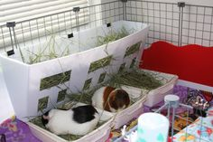 I made this hay rack/box from leftover coro. It's 30 inches wide, 9 inches deep at the top, 2 inches deep at the bottom, and 11 inches tall. The litter boxes are veggie baskets and tubs. This has worked so well. I put wood pellets on the bottom tub, put the basket in place, add hay. It keeps hay and poop separated from the litter. It's so easy to clean. I just take the basket out, dump it and wipe then add some hay. The basket/tub is 10x13 inches, perfect size for each pig.