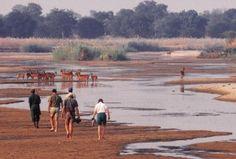 Walking Safaris Zambia Victoria Falls, Game Reserve, Natural Wonders, Continents, Wilderness, Safari, Wildlife, Africa, Bucket