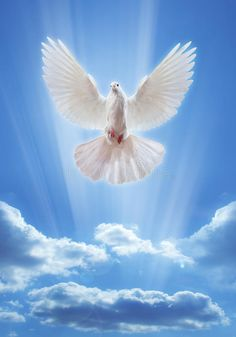Dove In The Air With Wings Wide Open Stock Photo - Image of flying, perfection: 39800038 Dove Pictures, Nature Pictures, Dove Images, Beautiful Love Pictures, Beautiful Birds, Bisous Gif, Good Day Wishes, Indian Flag Wallpaper, Heaven Poems