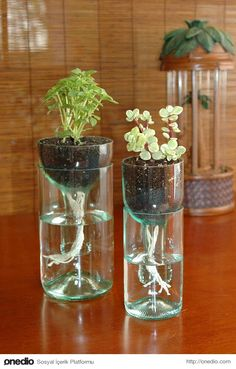 This DIY self watering planter is made from recycled wine bottles and requires o. - This DIY self watering planter is made from recycled wine bottles and requires o – Planters – I -