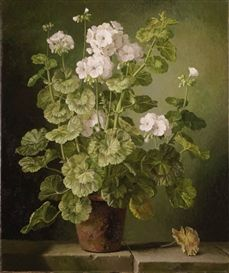 'White geraniums in a terracotta pot' - by Gerald Cooper.-