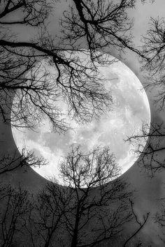 Bild über We Heart It http://weheartit.com/entry/244066399 #dark #moon