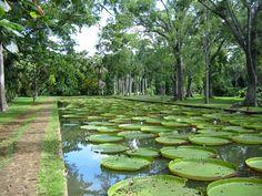 Ile Maurice, Jardin de Pamplemousse