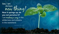 50-most-beautiful-bible-verses-Isiah-4319