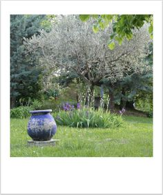 La maison Bleue - Drôme - lizaduboutdumonde